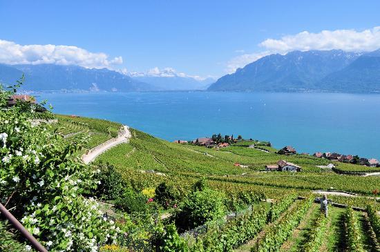 スイス クララン